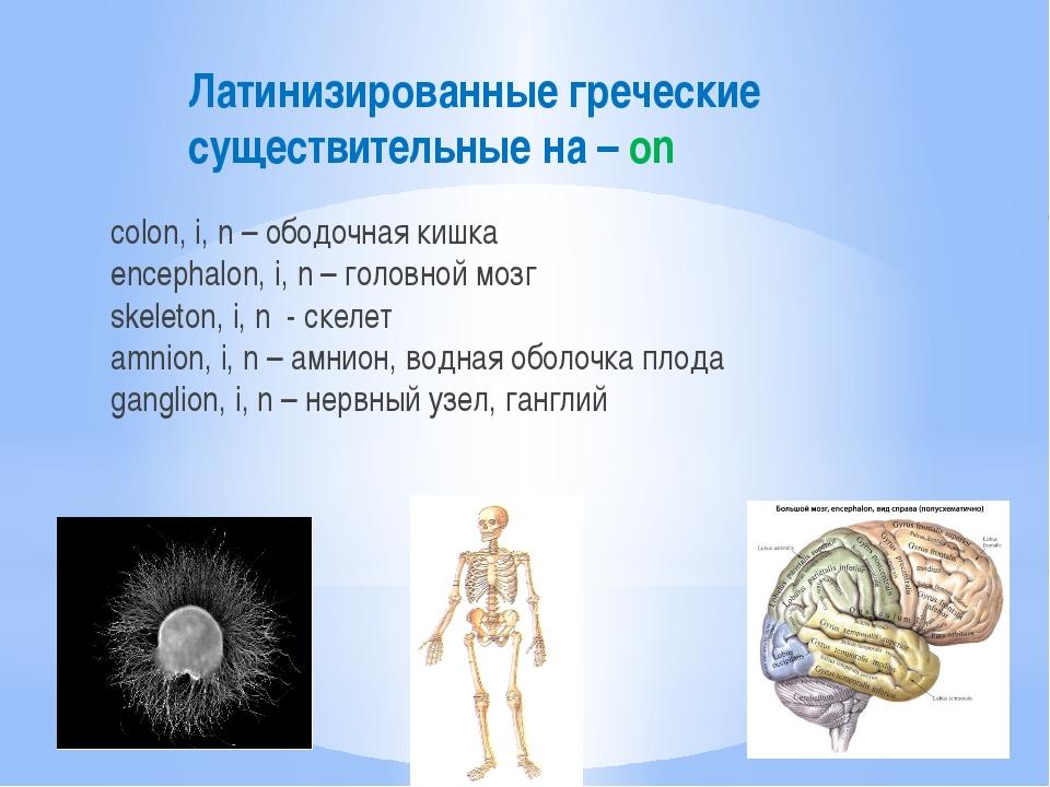 Латинизированные греческие существительные на – on colon, i, n – ободочная ки...