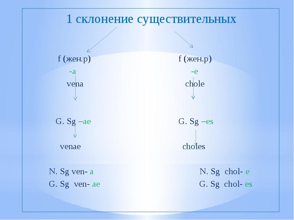 1 склонение существительных f (жен.р) f (жен.р) -a -e vena chole G. Sg –ae G....