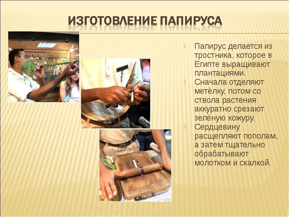 Папирус делается из тростника, которое в Египте выращивают плантациями. Снача...