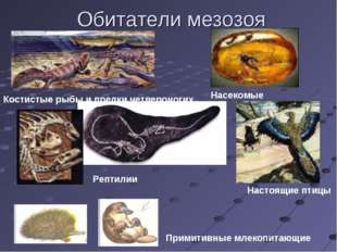 Обитатели мезозоя Костистые рыбы и предки четвероногих Насекомые Рептилии Нас