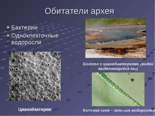 Обитатели архея Бактерии Одноклекточные водоросли Болото с цианобактериями (в