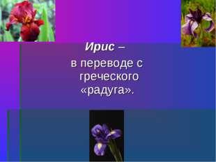 Ирис – в переводе с греческого «радуга».