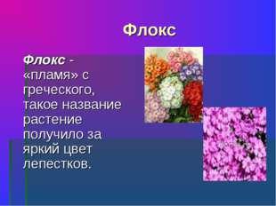 Флокс Флокс - «пламя» с греческого, такое название растение получило за ярки