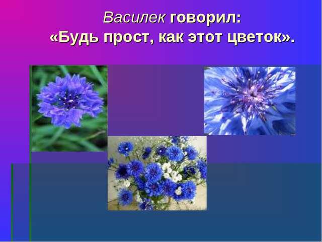 Василек говорил: «Будь прост, как этот цветок».