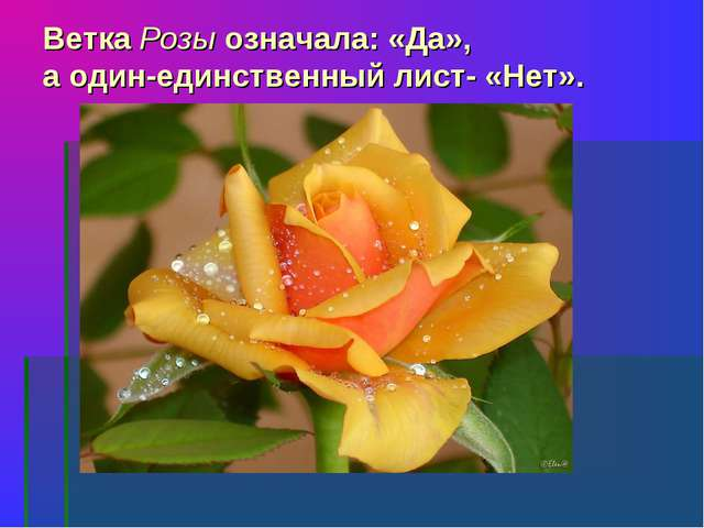 Ветка Розы означала: «Да», а один-единственный лист- «Нет».