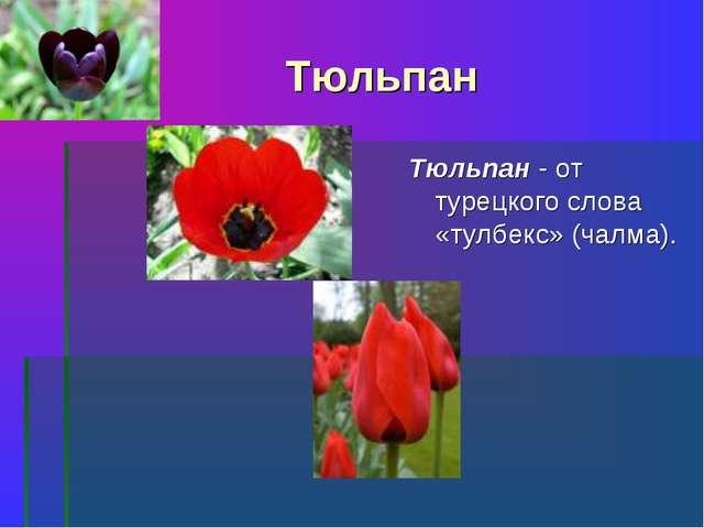 Тюльпан Тюльпан - от турецкого слова «тулбекс» (чалма).