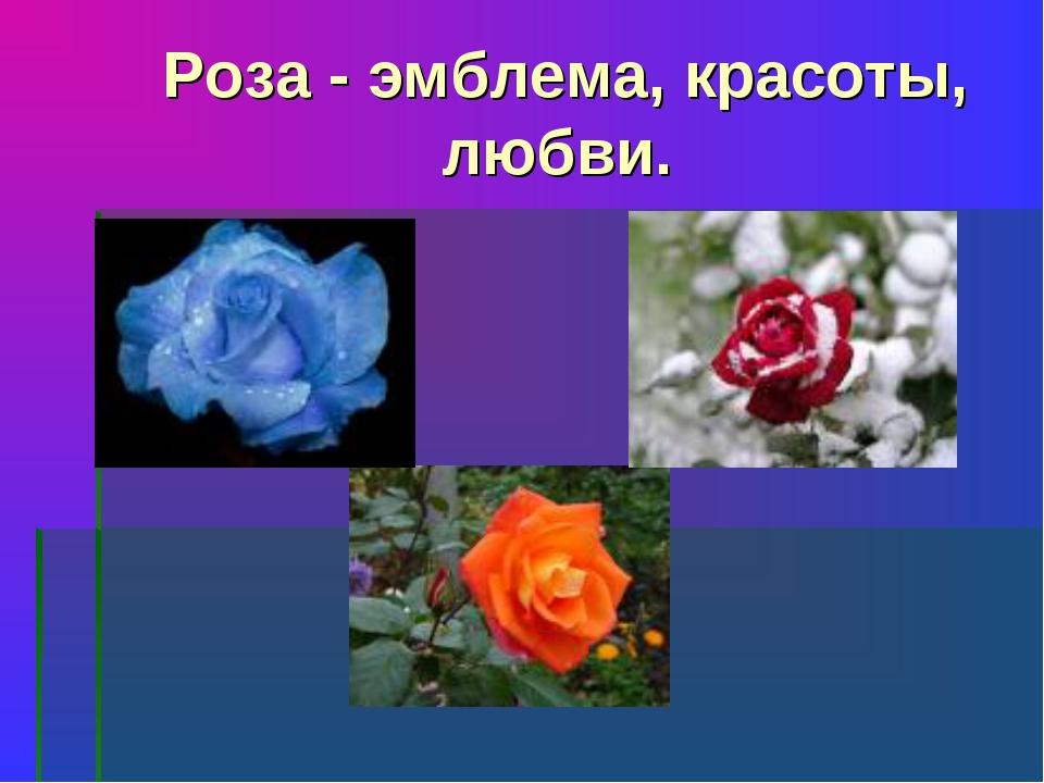 Роза - эмблема, красоты, любви.