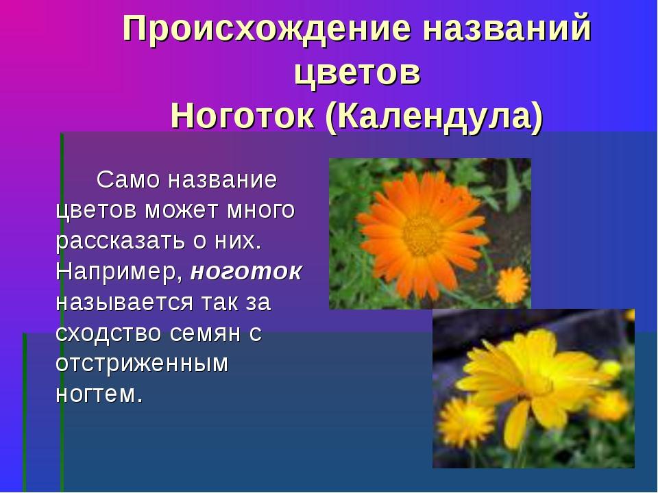 Происхождение названий цветов Ноготок (Календула) Само название цветов може...