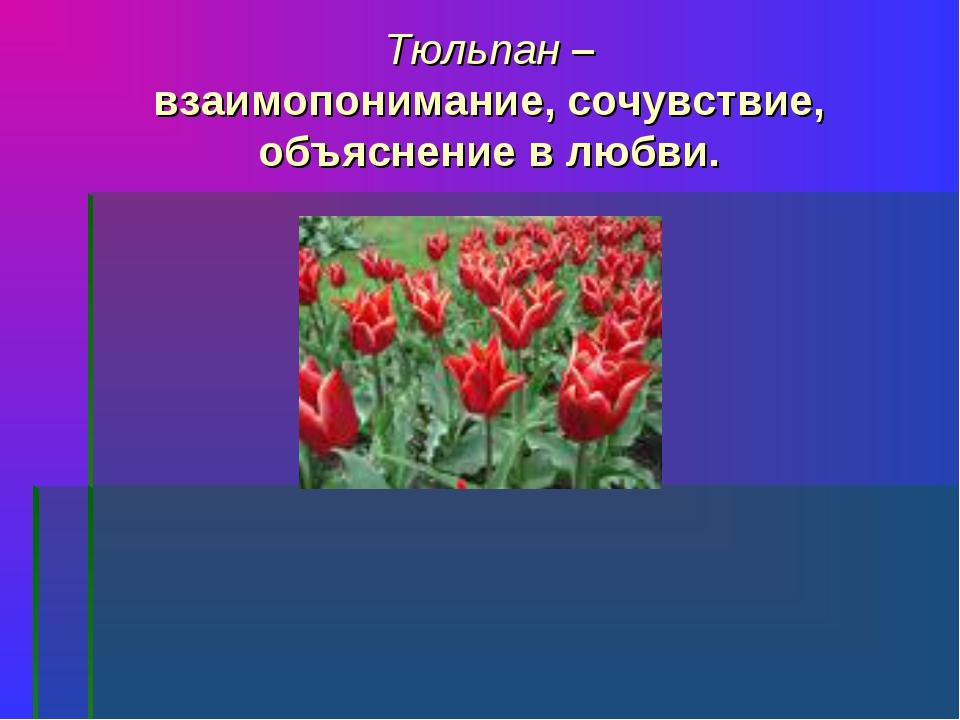Тюльпан – взаимопонимание, сочувствие, объяснение в любви.