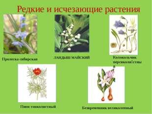 Редкие и исчезающие растения Пролеска сибирская ЛАНДЫШ МАЙСКИЙ Пион тонколист