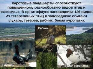 Карстовые ландшафты способствуют повышенному разнообразию видов птиц и насеко