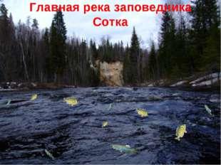 Главная река заповедника Сотка
