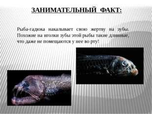 Рыба-гадюка накалывает свою жертву на зубы. Похожие на иголки зубы этой рыбы