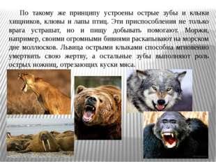 По такому же принципу устроены острые зубы и клыки хищников, клювы и лапы пт