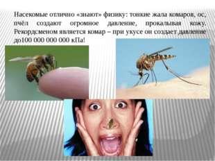 Насекомые отлично «знают» физику: тонкие жала комаров, ос, пчёл создают огром