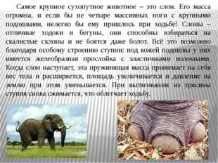 Самое крупное сухопутное животное – это слон. Его масса огромна, и если бы н