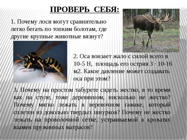 1. Почему лоси могут сравнительно легко бегать по топким болотам, где другие...