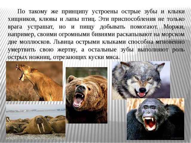 По такому же принципу устроены острые зубы и клыки хищников, клювы и лапы пт...