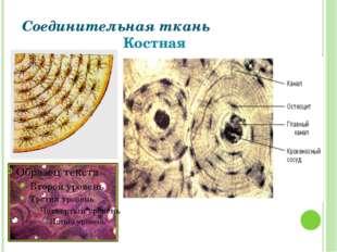 Соединительная ткань Костная Григорьева Галина Михайловна