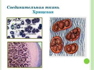 Соединительная ткань Хрящевая Григорьева Галина Михайловна