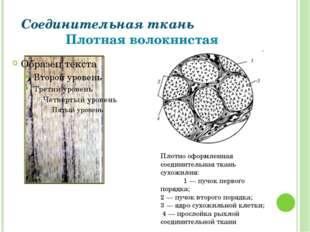 Соединительная ткань Плотная волокнистая Плотно оформленная соединительная тк