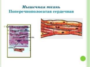 Мышечная ткань Поперечнополосатая сердечная Григорьева Галина Михайловна