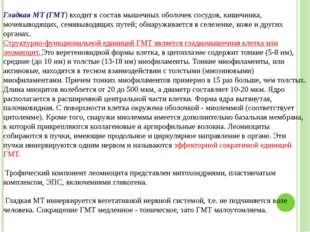 Григорьева Галина Михайловна Гладкая МТ (ГМТ) входит в состав мышечных оболо