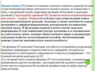 Григорьева Галина Михайловна Нервные ткани (НТ) являются основным тканевым э