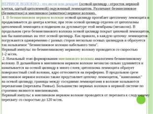 Григорьева Галина Михайловна НЕРВНОЕ ВОЛОКНО - это аксон или дендрит (осевой