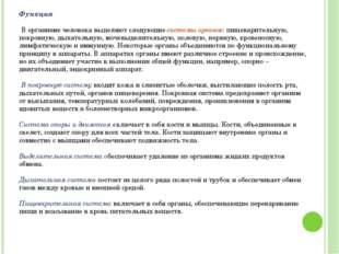 Григорьева Галина Михайловна Функция В организме человека выделяют следующие
