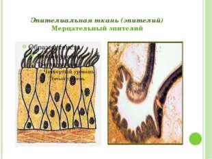 Эпителиальная ткань (эпителий) Мерцательный эпителий Григорьева Галина Михайл