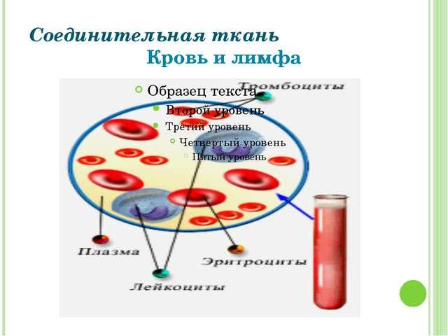 Соединительная ткань Кровь и лимфа Григорьева Галина Михайловна