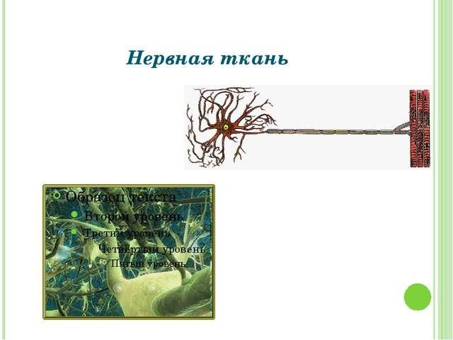 Нервная ткань Григорьева Галина Михайловна