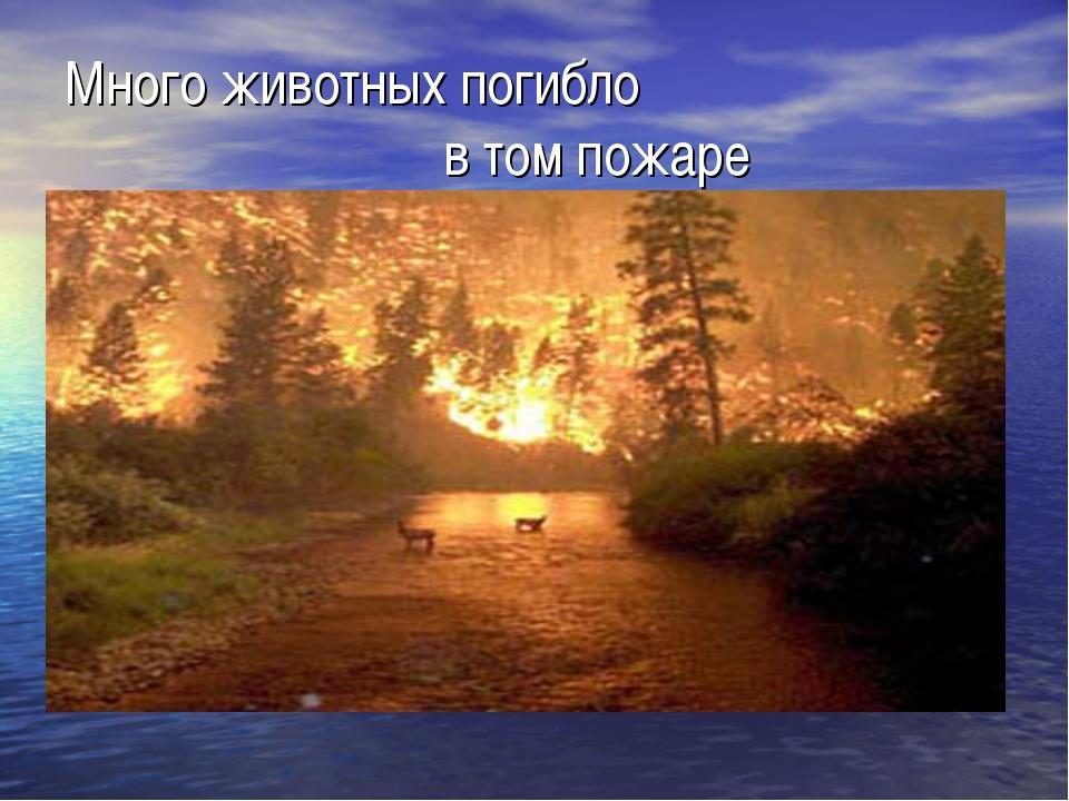Много животных погибло в том пожаре
