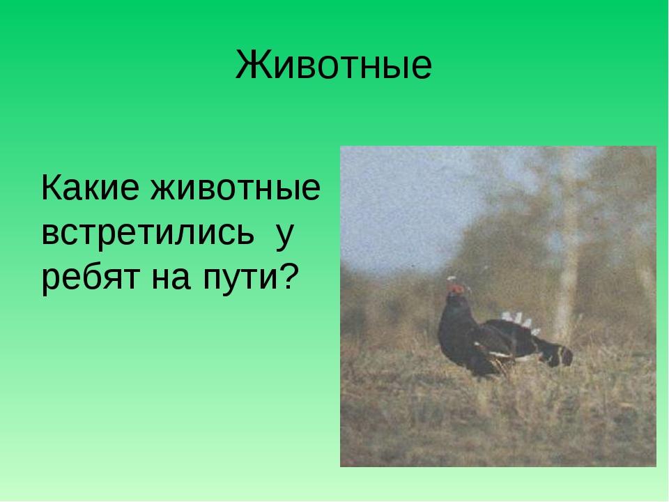 Животные Какие животные встретились у ребят на пути?