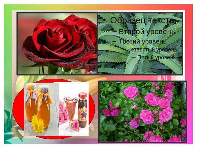 9.Какие цветы росли в саду у Кая и Герды? 10.Какой цветок говорит о своём до...