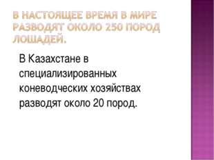 В Казахстане в специализированных коневодческих хозяйствах разводят около 20