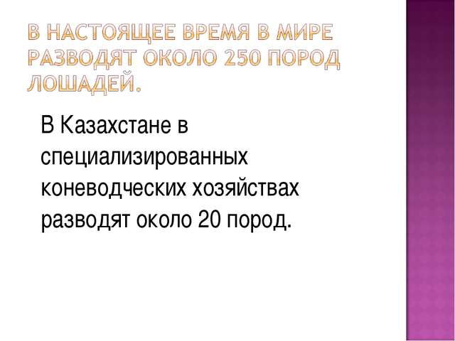 В Казахстане в специализированных коневодческих хозяйствах разводят около 20...