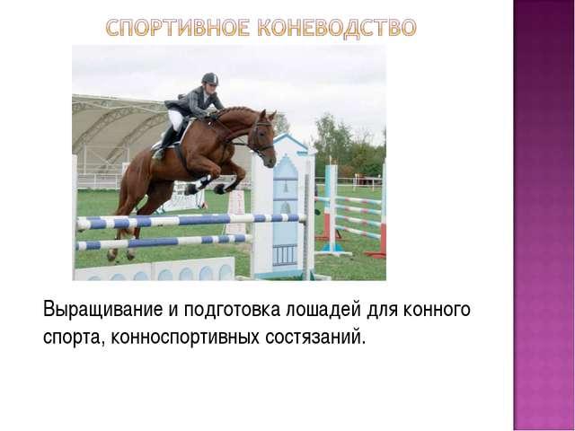Выращивание и подготовка лошадей для конного спорта, конноспортивных состяза...