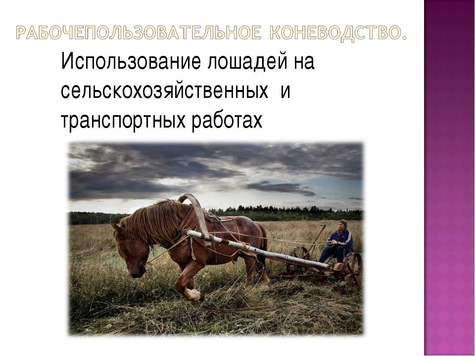 Использование лошадей на сельскохозяйственных и транспортных работах