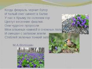 Когда февраль чернит бугор И талый снег синеет в балке У нас в Крыму по склон
