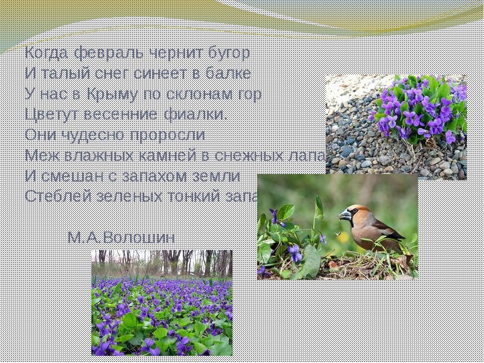 Когда февраль чернит бугор И талый снег синеет в балке У нас в Крыму по склон...