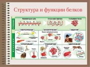 Структура и функции белков