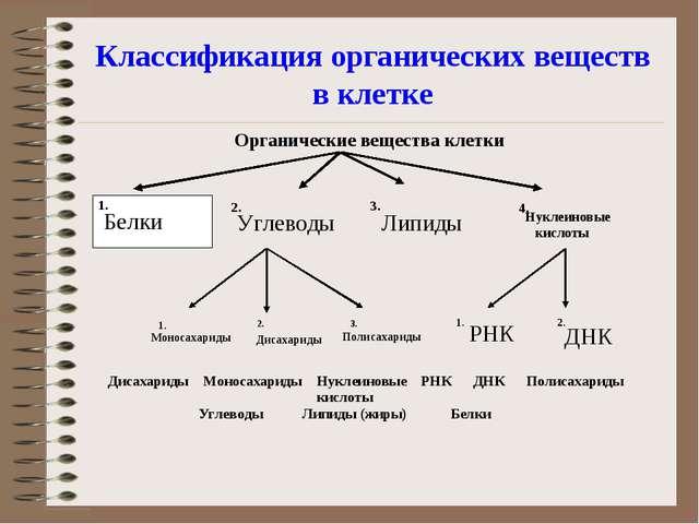 Классификация органических веществ в клетке Белки Углеводы Моносахариды Дисах...