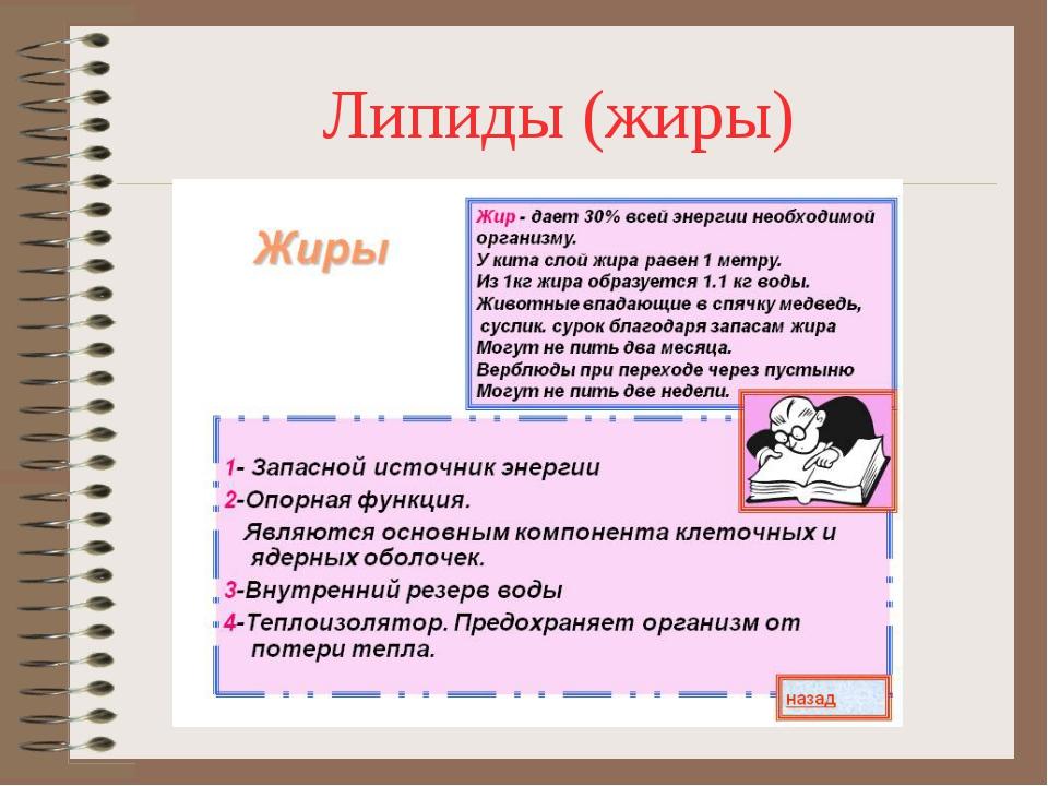Липиды (жиры)