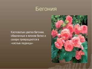 Бегония Кисловатые цветки бегонии, обваленные в яичном белке и сахаре превращ