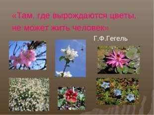 «Там, где вырождаются цветы, не может жить человек» Г.Ф.Гегель