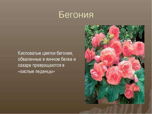 Бегония Кисловатые цветки бегонии, обваленные в яичном белке и сахаре превращ...