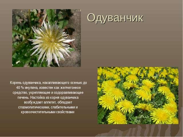 Одуванчик Корень одуванчика, накапливающего осенью до 40 % инулина, известен...