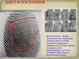 Дактилоскопия – раздел криминалистики, изучающий строение кожных узоров внутр